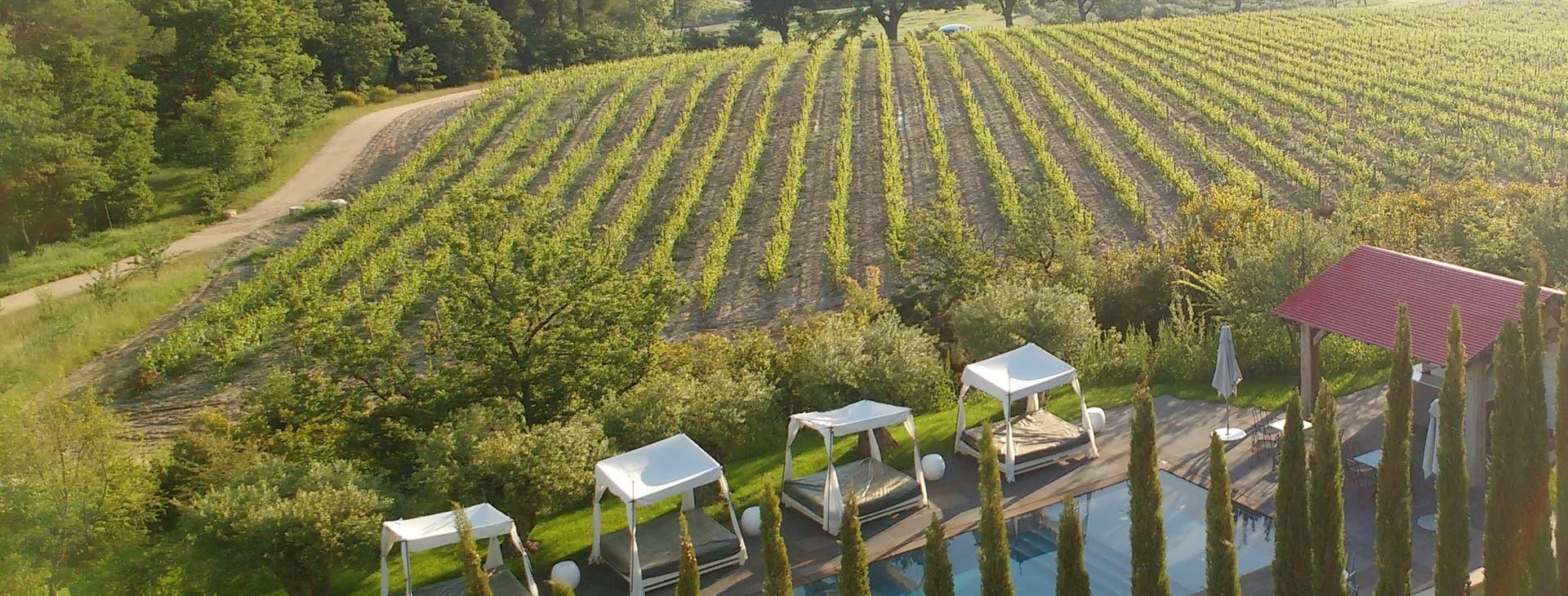 Tintos Mediterráneos. Los flamantes vinos que renuevan la góndola local