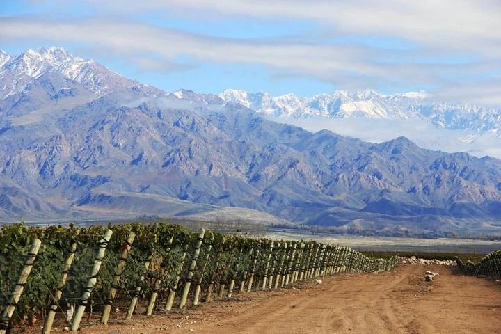 Les presento Melodía Wines, emprendimiento de Mendoza para el Mundo