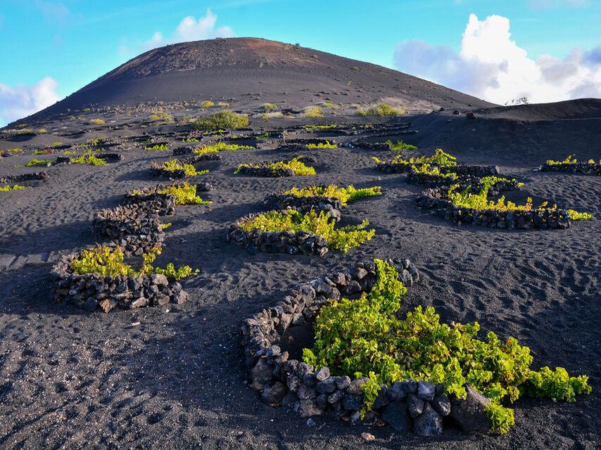 Vinos Canarios: Islas volcánicas sumergidas de vino